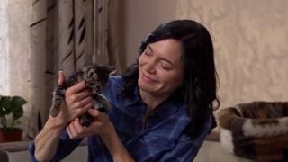 Котенок в доме (первые дни): как подготовиться, что купить котенку