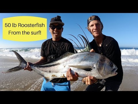 Huge Roosterfish Surf Fishing In Cabo