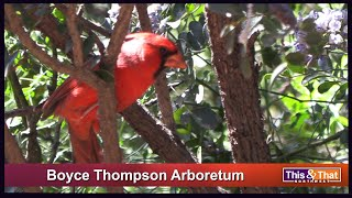Boyce Thompson Arboretum Park - Part 2