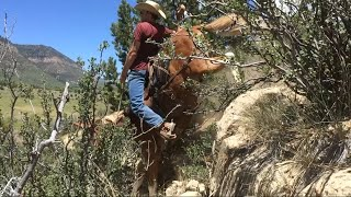 Extreme Mule Riding- Twin Mule Edition