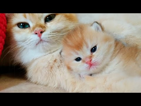 💕 2 Weeks After Birth | Tiny Kittens Meowing | Soo Cute