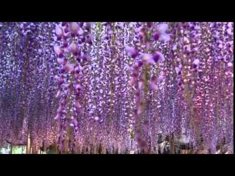 Самые красивые декоративные деревья для сада названия с фото