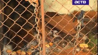 Собака, которая более 10 дней просидела на цепи в маленькой клетке, ищет заботливого хозяина
