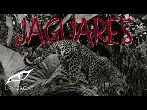 Young Eiby – Jaguares (Cover Video)