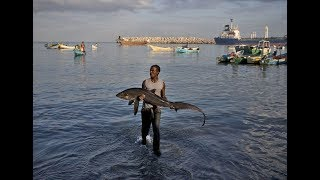 Somalia gives up it's fishing rights to China