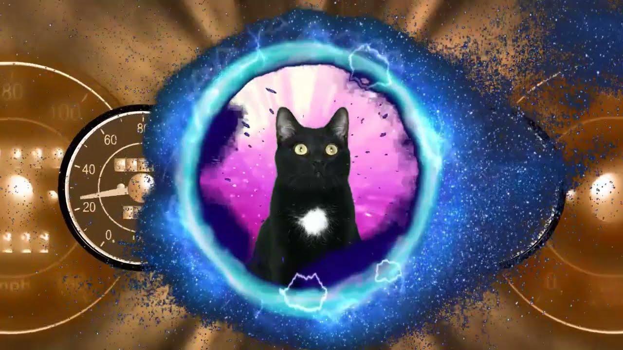 Gato vs viaje en el tiempo con gatos graciosos Luna y Estrella / Videos de gatitos chistosos