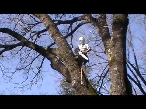 Most Incredible Tree Removal with Crane