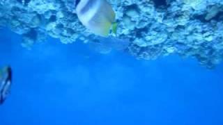 恩納村GOOD LIFEの瀬底島ボートツアーにて瀬底島より船で20分。 水納島...