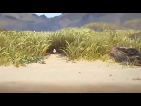 piper pixar short film 2016 full