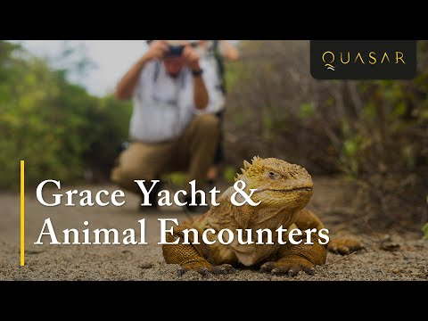 Another Galapagos Cruise Aboard the Grace Yacht & Animal Encounters