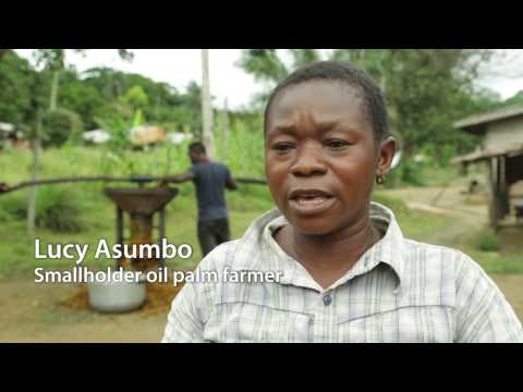 Sustainable development of Cameroon's palm oil