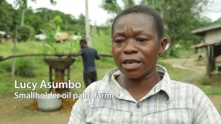 Sustainable development of Cameroon\'s palm oil