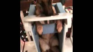 Megaesophagus Dog Eating In Bailey Chair.mov