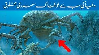 The World's Most Dangerous Sea Creatures - Amazing Pakistan in Urdu & Hindi