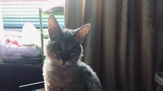 Мои коты/ Кот ест арахис/ Ореха вкус пленил🤪/
