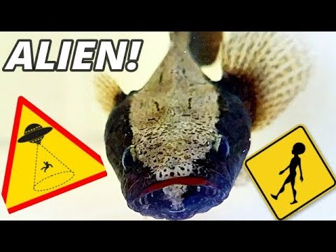 ALIEN MONSTER FISH TRANSPORT! & my PET POTATO ATTACKS his food!
