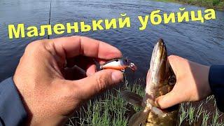 Маленький убийца щук и голавлей Рыба найдена клёв попёр