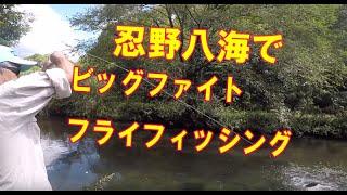 忍野八海でビッグファイト! Fishing in Oshino,Mt.Fuji in Japan thumbnail