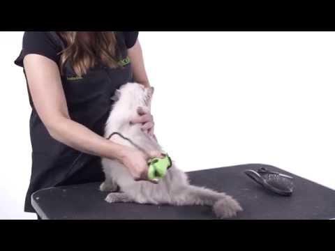 Cat Grooming 101
