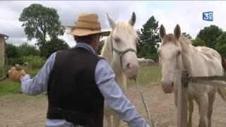 passion cheval, la calèche (épisode 2/5)