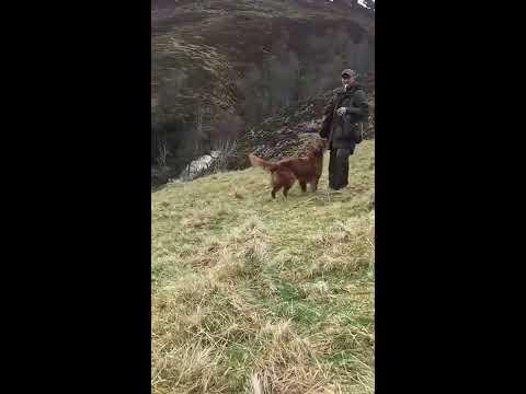 gundog training Scotland April 2017
