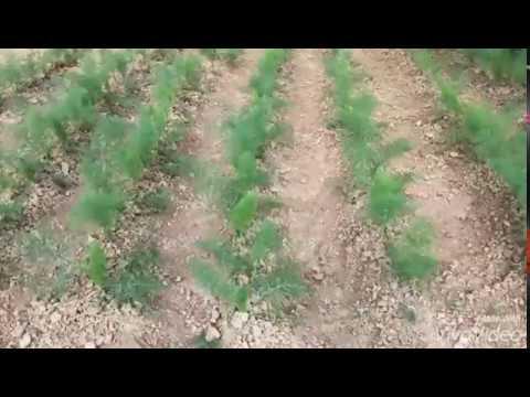 Agri Bio Market Corropoli