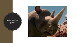 Носороги презентация СКАЗКА