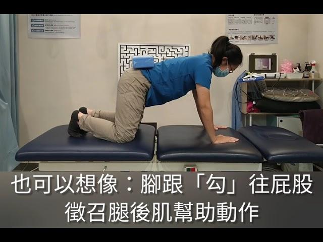 四足跪姿之髖關節屈曲控制