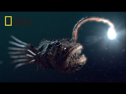 Deep Sea Creatures [National Geographic Documentary 2017 HD]