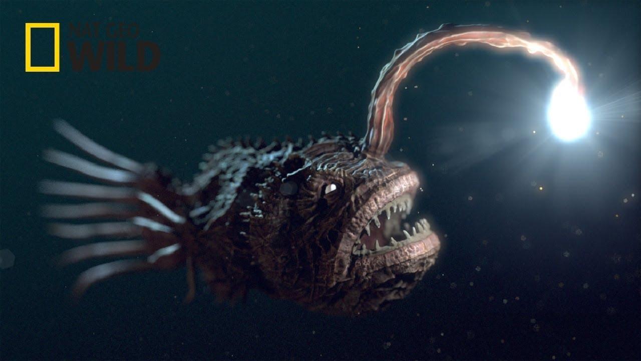 Deep Sea Creatures [National Geographic Documentary]