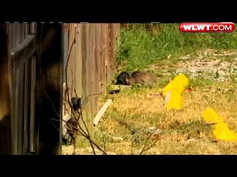 Stray Cat Population Explodes In Cincinnati
