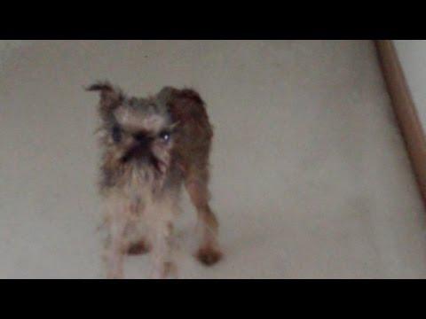 Wet Dog - YouTube