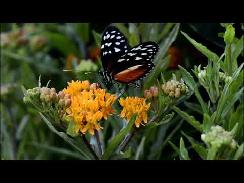 Butterfly in Nature HD