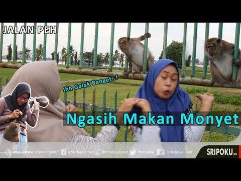 Asyiknya Habiskan Sore Bersama Ratusan Monyet di Stadion Patra Jaya Palembang