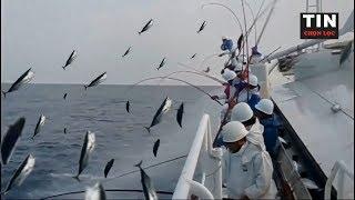 Bạn sẽ không tin nổi cách câu cá ngừ của người Nhật đâu - Có là ngư dân cũng không nằm mơ ra được