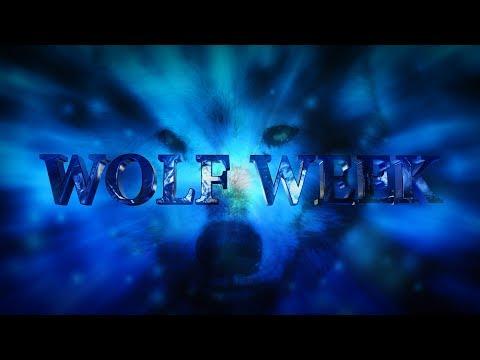 Wolf Week in Yellowstone