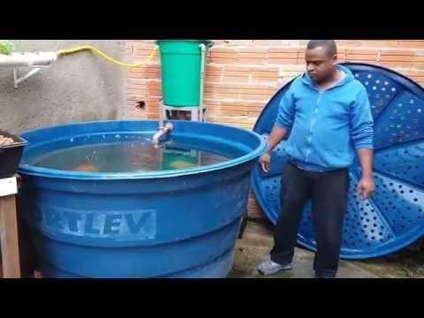 Criar Peixes em Casa