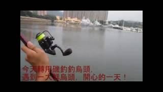 香港 釣魚 磯釣 記錄08 烏頭 烏魚 爆釣日