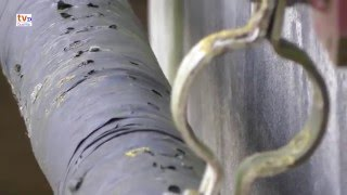 Raadvideo Lemelerveld 24 Bijzonder slangetje
