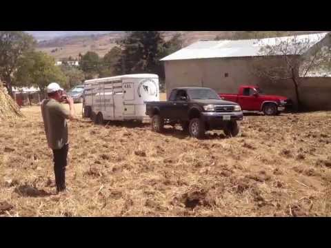 Toyota tacoma V6 pulling 4500 lb horse trailer on plow field with bald tires.