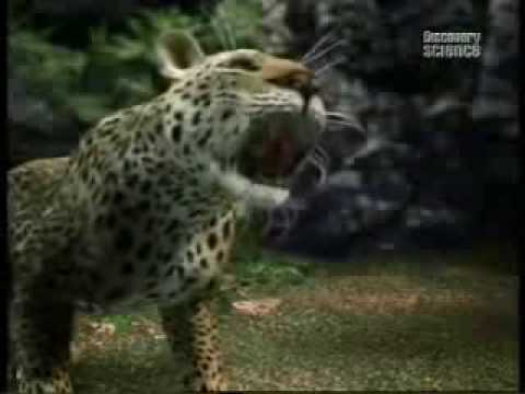 A Gorilla Fights A Leopard (CG) - YouTube
