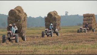 ត្រាក់ទ័រដឹកចំបើងនៅខេត្តតាកែវ | គោយន្តដឹកចំបើង | Tractor Transport Straw on Field