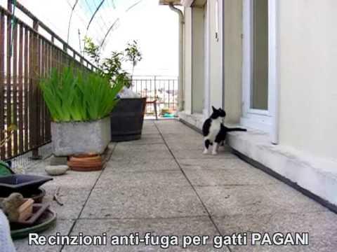 Recinzione Giardino Per Gatti.Recinzione Gatti Http Www Recinzionipergatti Com Youtube