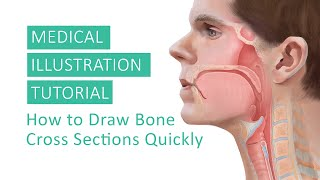 Medical Illustration Tutorial - How to Draw Bone Cross Sections Quickly by Annie Campbell