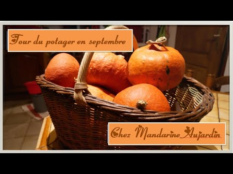 98-un-tour-du-potager-et-une-recette-(cake-au-potimarron-et-chorizo)
