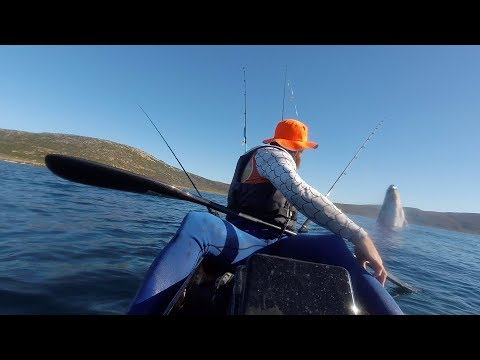 Whale Encounter While Kayak Fishing. Cape Point, South Africa