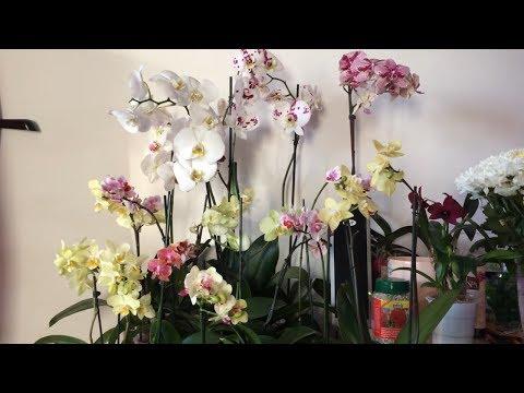 Что я купила в ОБИ. Орхидеи для Вас!