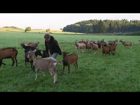 Maliesenhofer Ziegenkäse aus Waldeck-Freienhagen