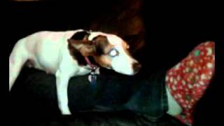 Dog Humping Leg!