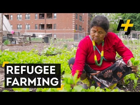 Asian Refugees In Chicago Farm For A Taste Of Home